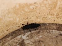 Neznámy chrobáčik