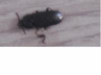 čo to je za chrobáka