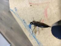 Prosím poraďte, co je to za létající/lezoucí hmyz u nas doma?